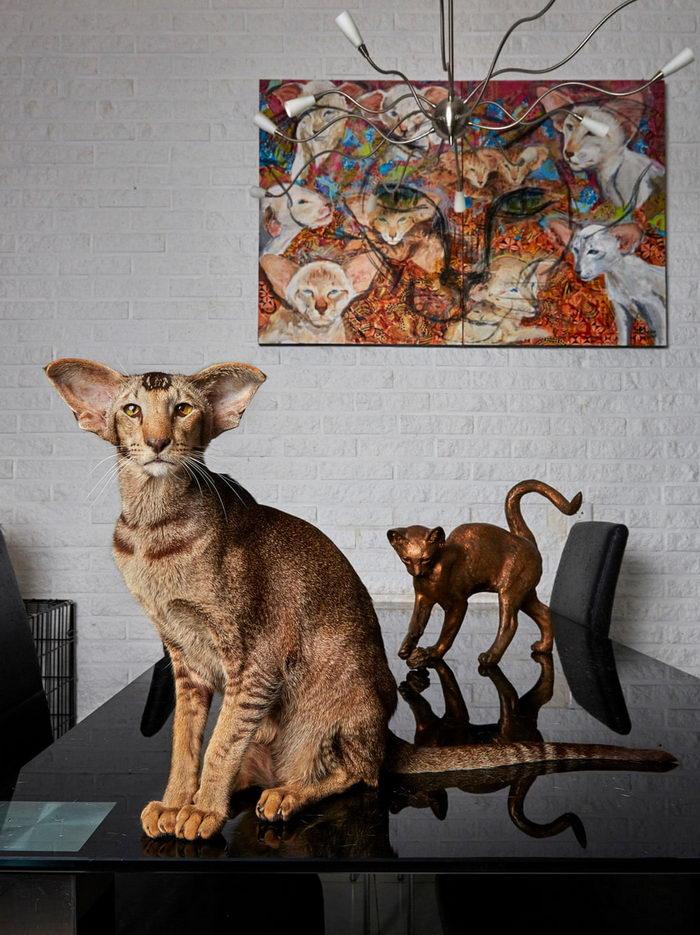 Домашние питомцы Амстердама в снимках Isabella Rozendaal