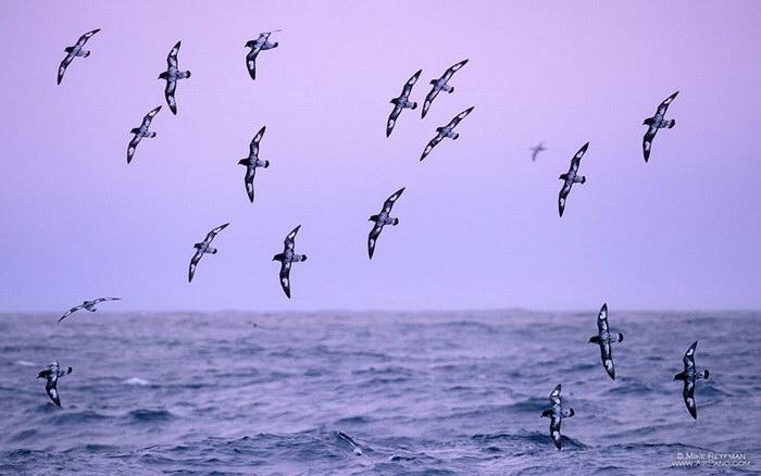 Загадочная Антарктида: фотографии AirPano