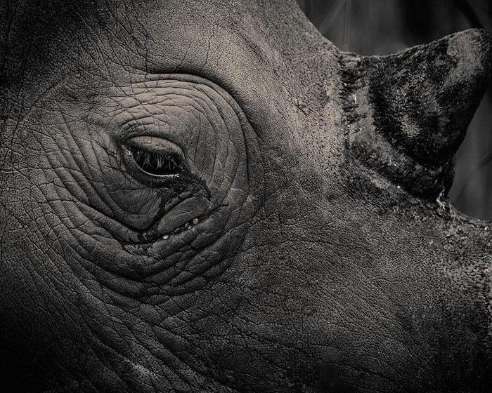 Экспрессивные животные в фотографиях Antti Viitala