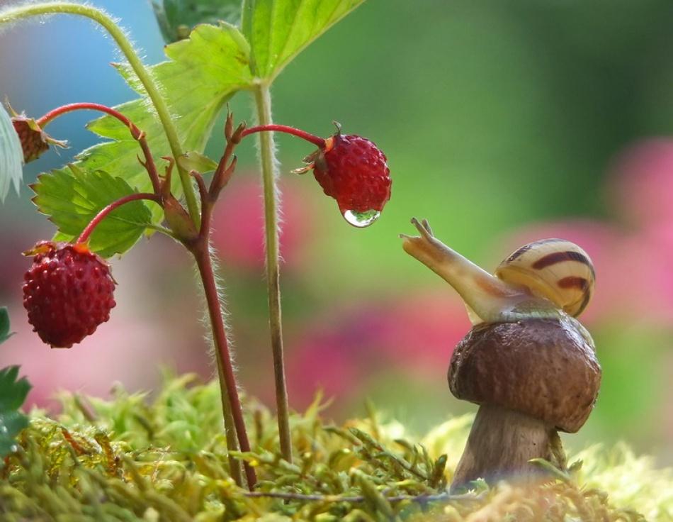 Красивые улитки в фотографиях Вячеслава Мищенко