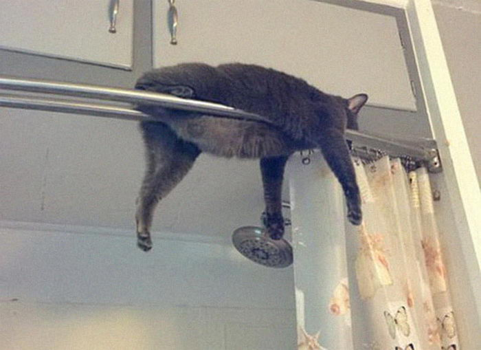 26 кошек, которые заснули в странных местах