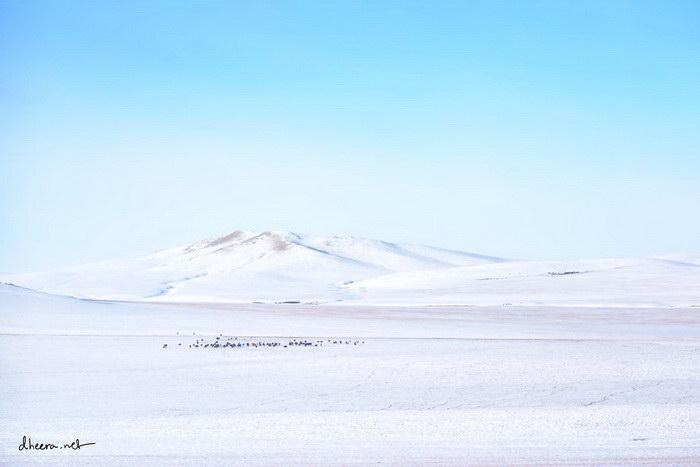 Монголия в фотографиях Dheera Venkatraman