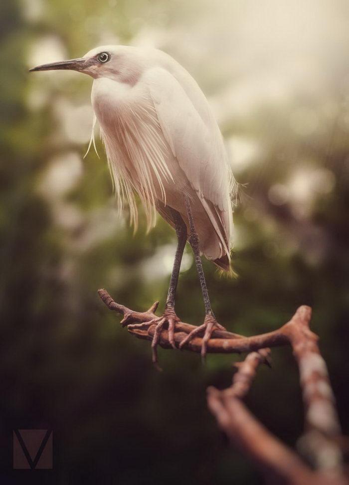 Фотографии животных Vicki Lea