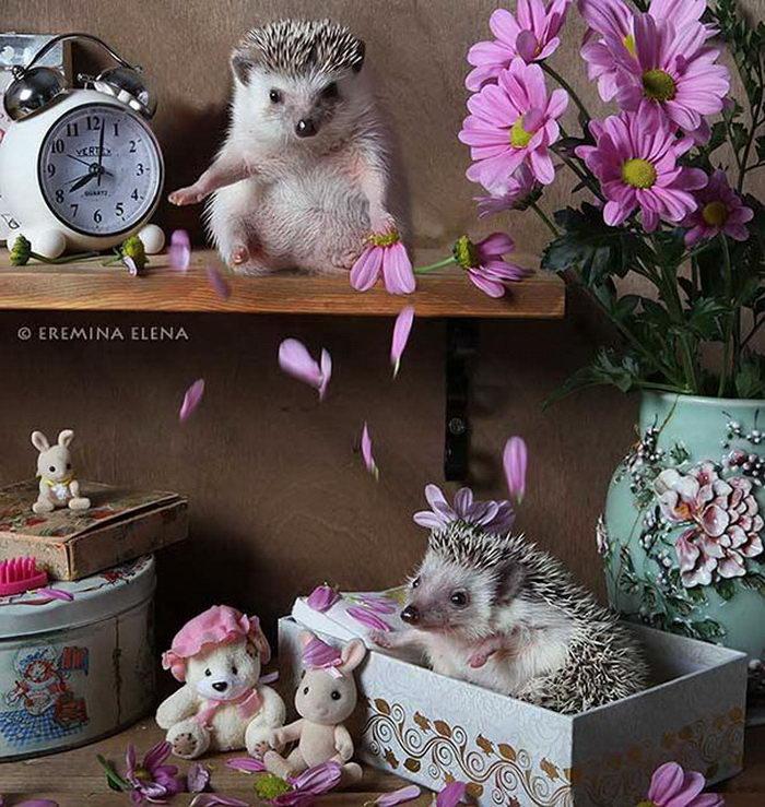 Тайная жизнь ежиков: фотографии Елены Ереминой