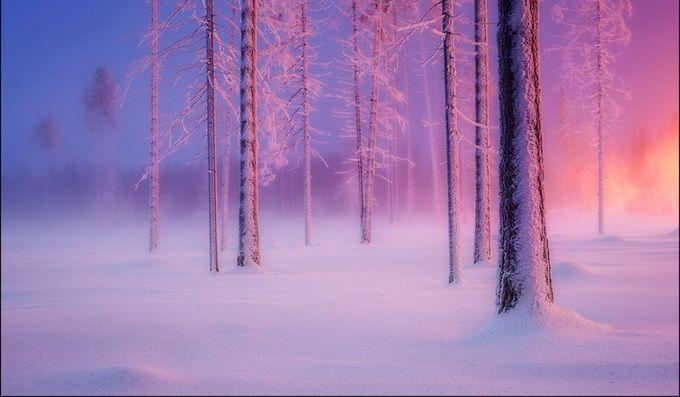 Красивый и таинственный русский лес