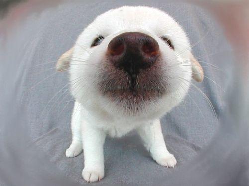 Собачий позитив
