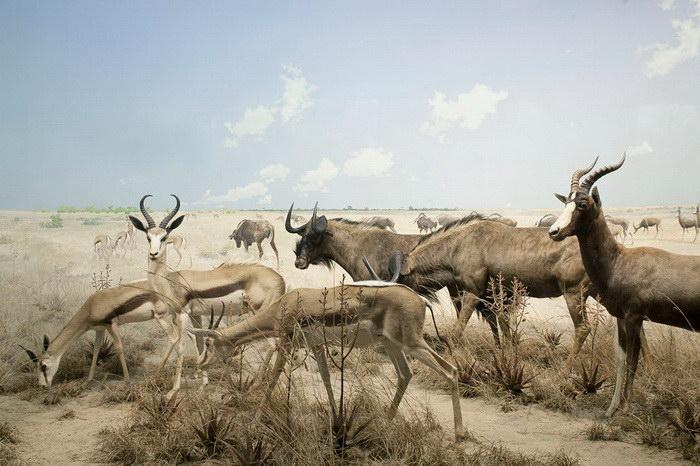 Фотоколлажи животных Leo Caillard