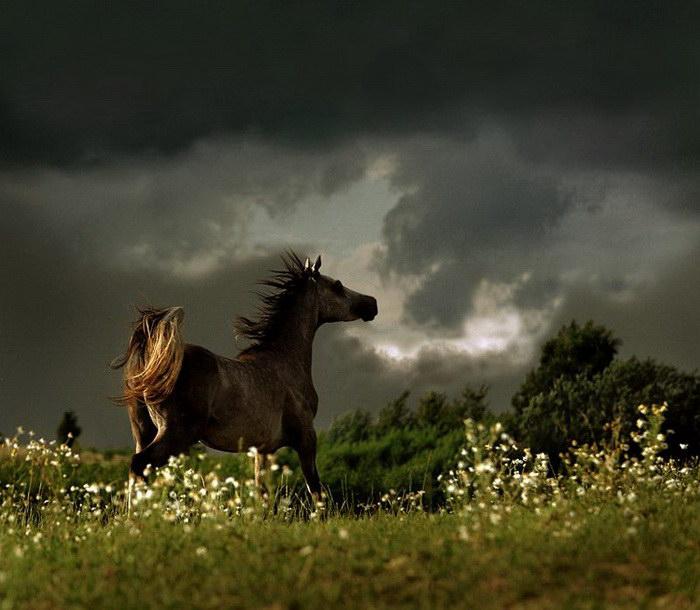 Красота лошадей в фотографиях Wojtek Kwiatkowski