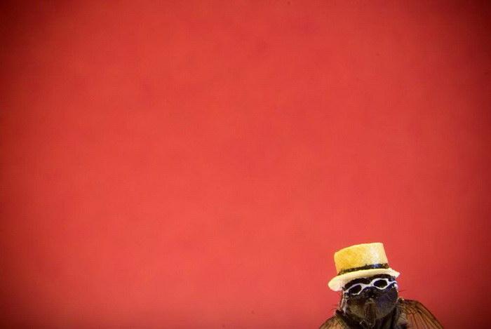 Фотографии одной мухи Nicholas Hendrickx