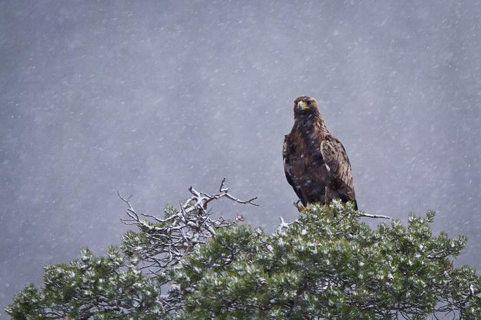 Хищные птицы в редких фотографиях Andreas Hemb