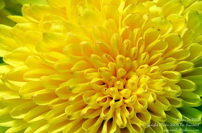 Насекомые и цветы в фотографиях Sompob Sasismit