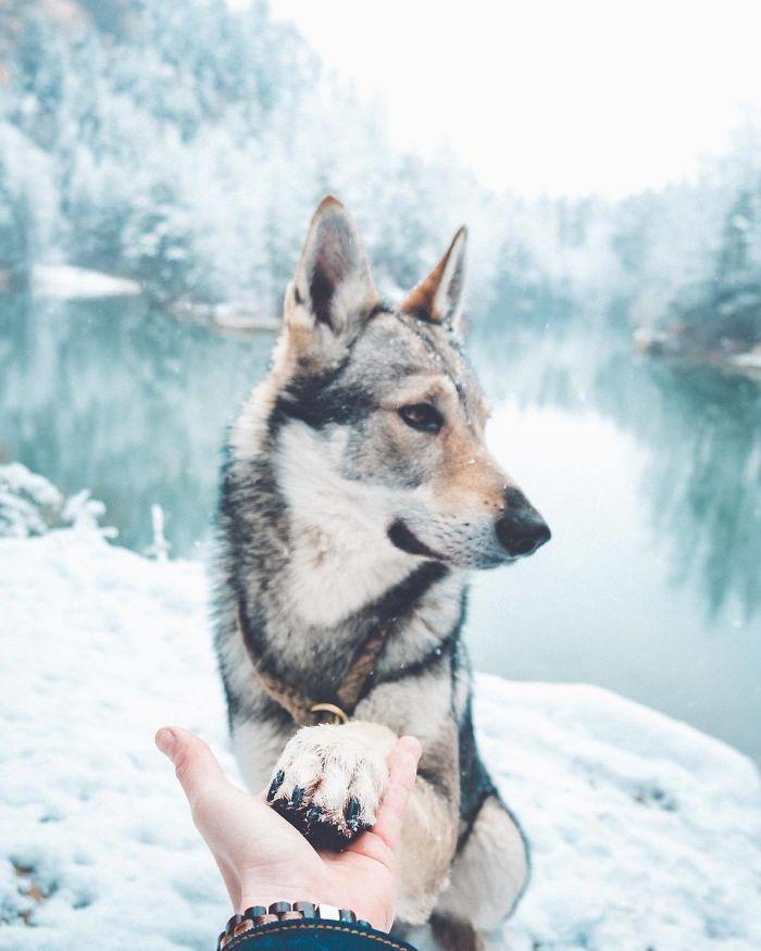Путешествия Honza Rehacek вместе с любимым псом