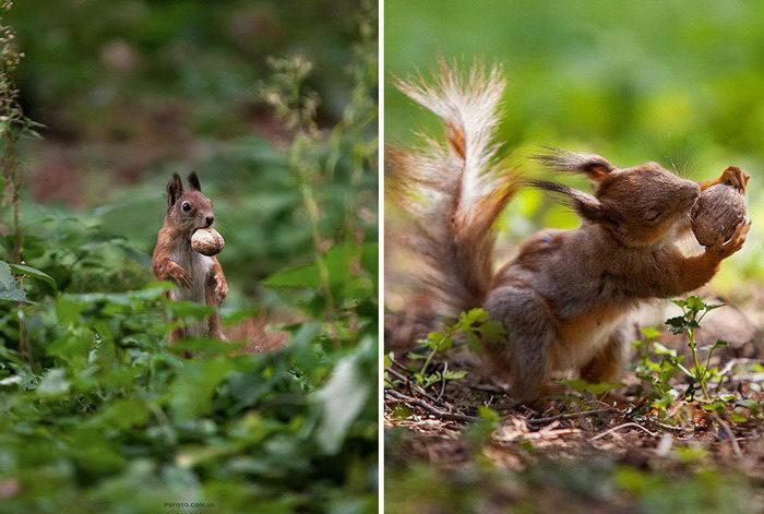Животные в фотографиях Sergey Polyushko