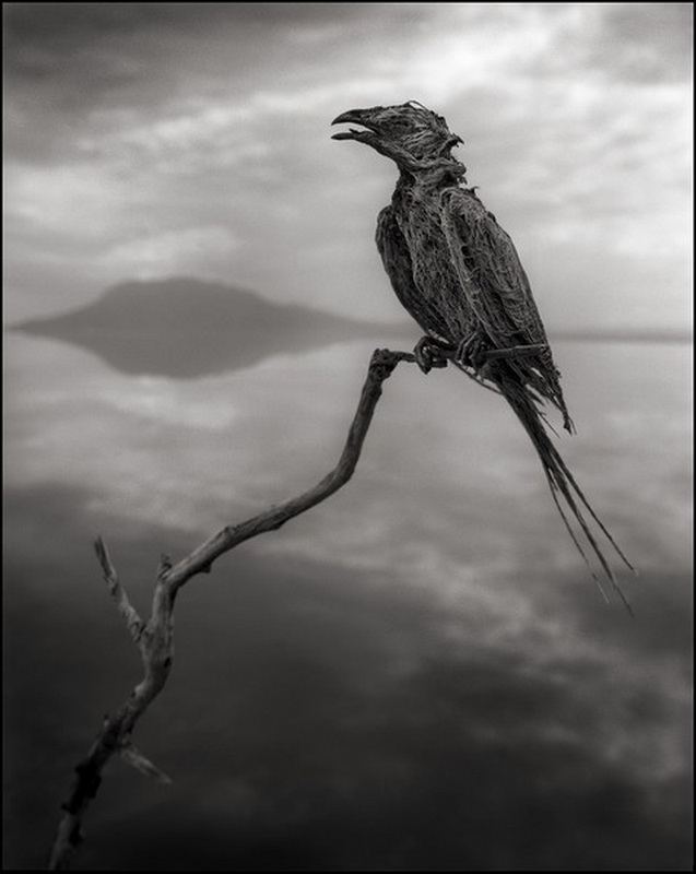 Жуткое озеро в Танзании в фотографиях Nick Brandt