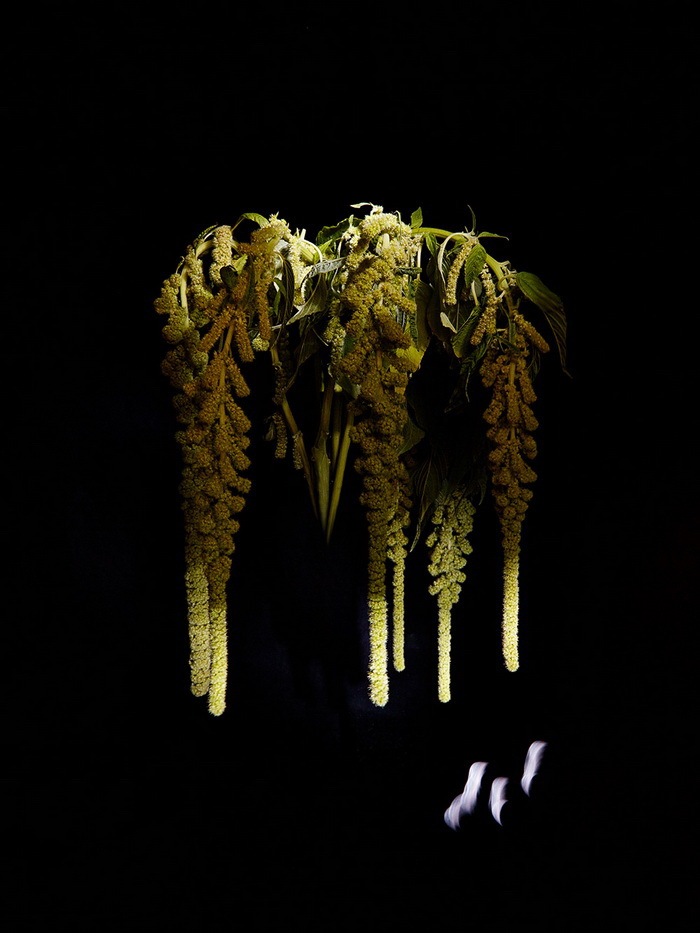 Цветы Sarah Illenberg