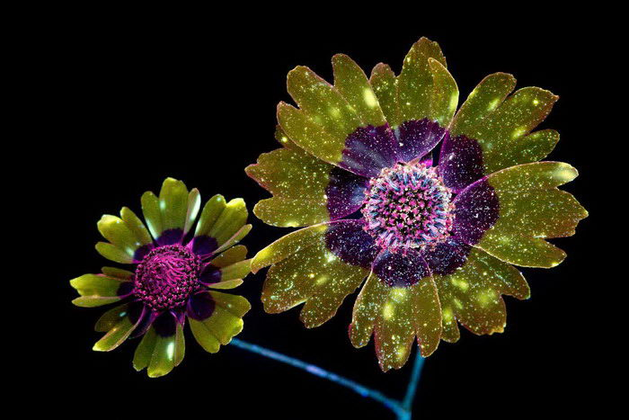 Портреты цветов: фотографии Craig Burrows