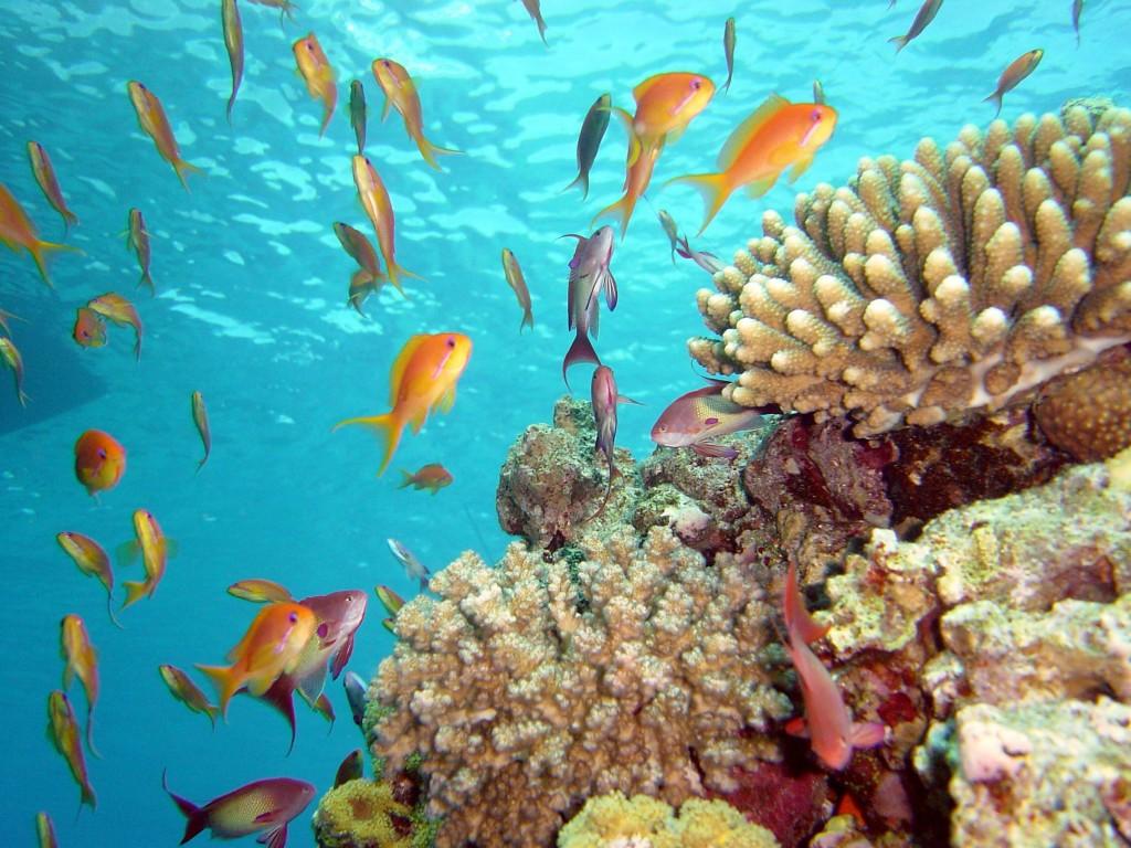Красочный подводный мир