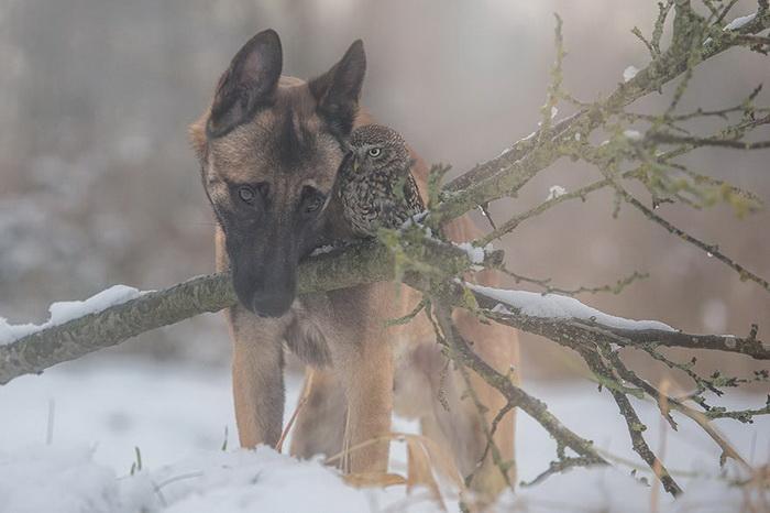 Невероятная дружба собачки и совушки