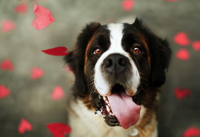 25 потрясающих фотографий собак
