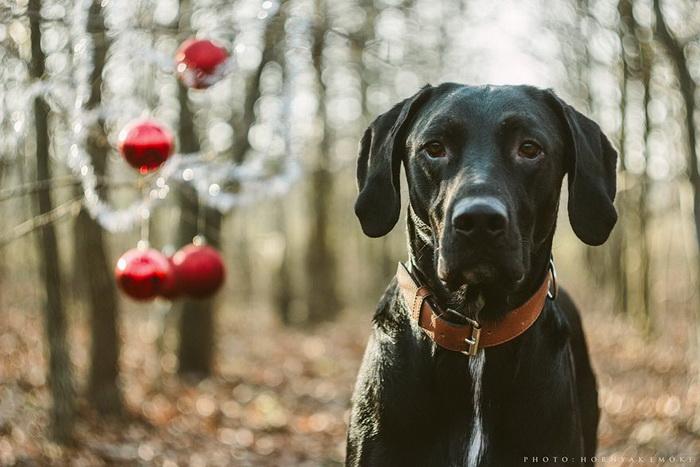 Собака по имени Джой