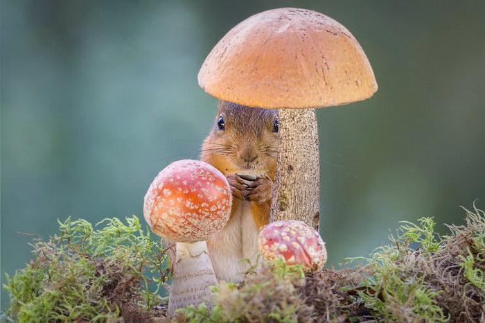 Игры белочек в саду в фотографиях Geert Weggen