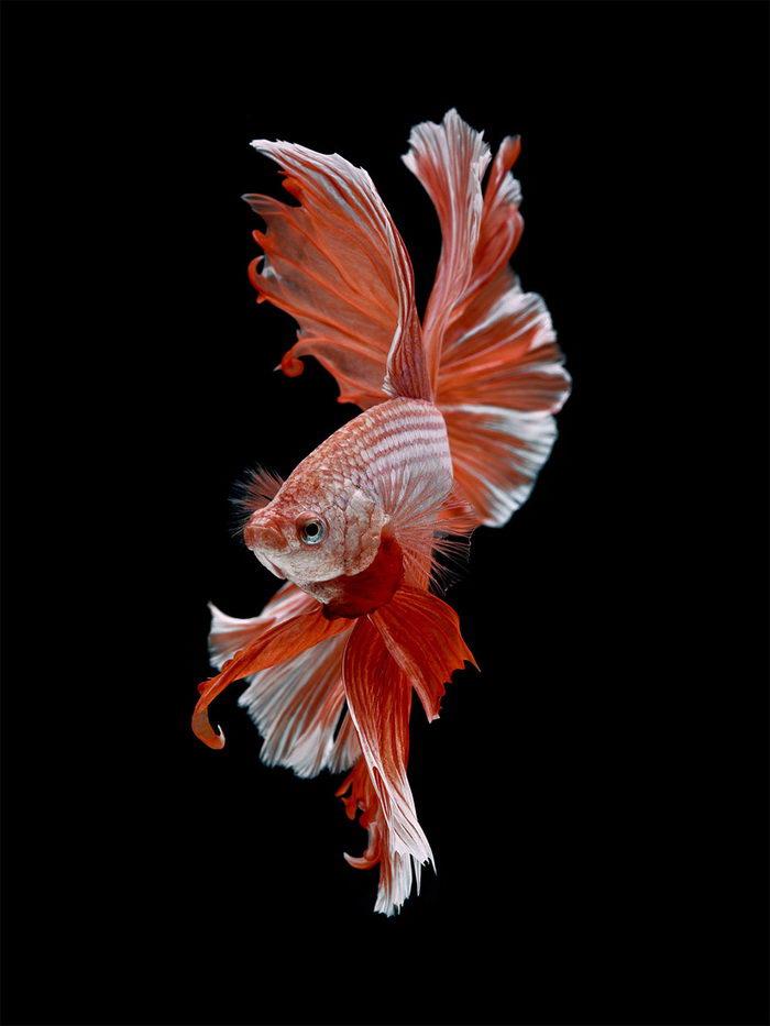 Рыбы в фотографиях Visarute Angkatavanich