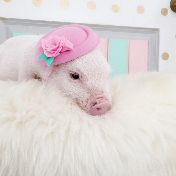 Животные и шляпы в фотографиях Lindsey Bonnice