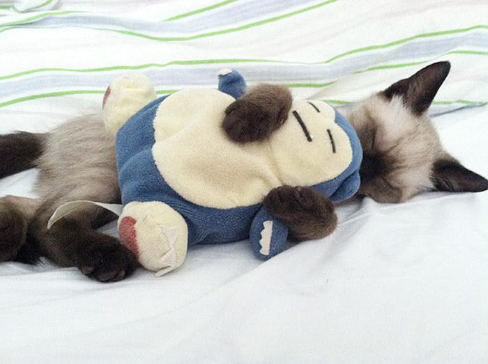Спящие котята: невероятно мимимишная подборка фото