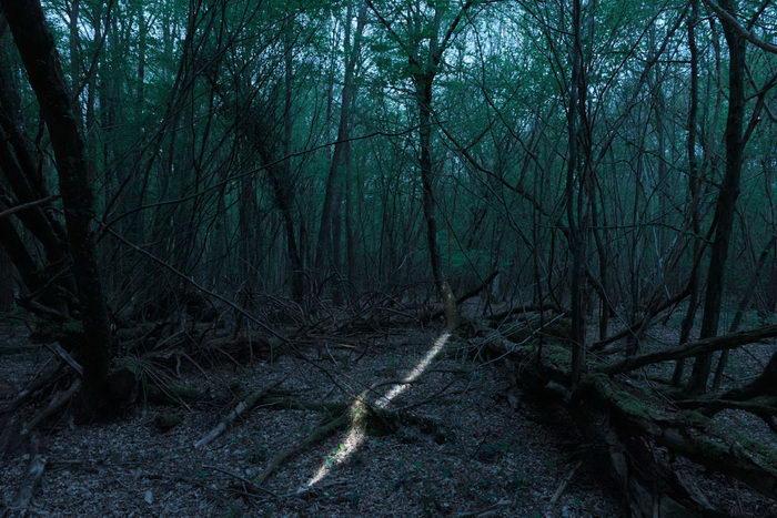 Мистика леса в фотографиях Alexis Pichot