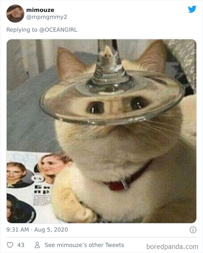 Искаженные через стекло животные: смешная фотоподборка