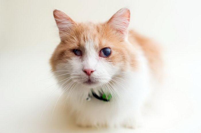 Слепые котики, ждущие своих будущих хозяев