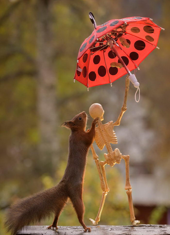 Белочка и Хэллоуин: фотографии Geert Weggen