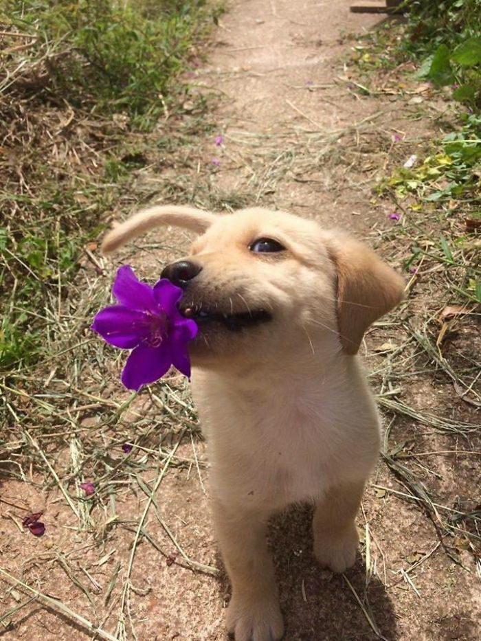 25 милейших щенков: подборка любви