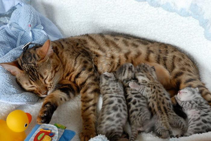 25 довольных семейной жизнью кошек с маленькими котятами