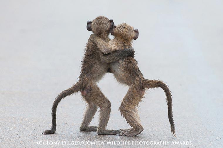 Победители конкурса смешных фотографий из мира животных 2015 года