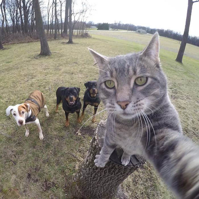 Эта кошка делает селфи лучше, чем каждый из нас