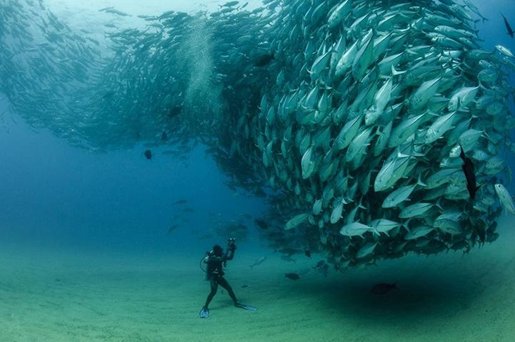 Невероятная подводная съемка Octavio Aburto