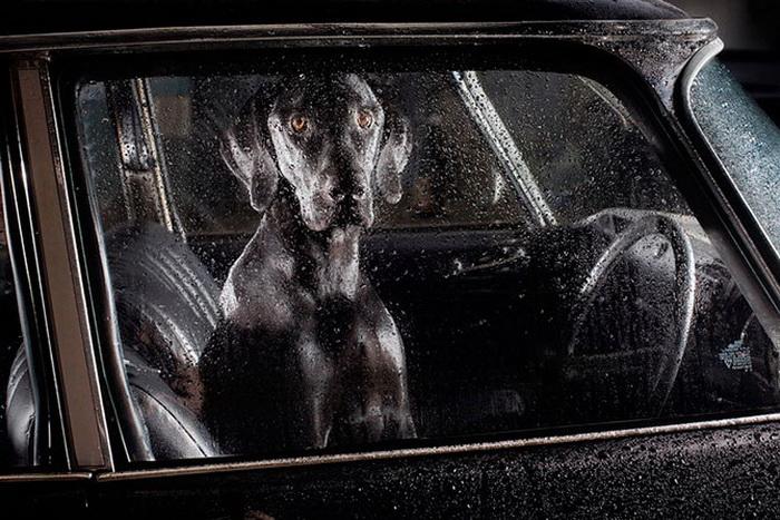 40 собак, ждущих хозяев в машине