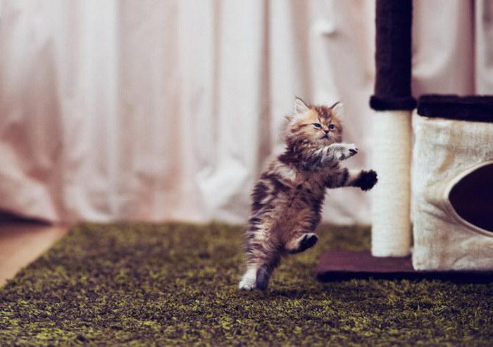Самый очаровательный котенок в мире
