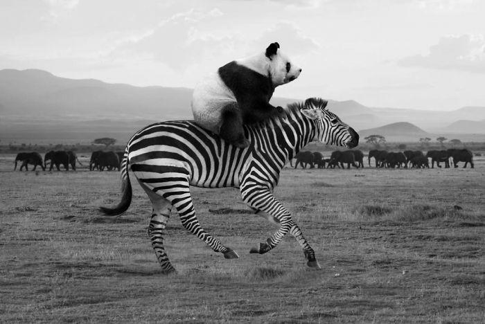 Смешные коллажи животных Thomas Subtil
