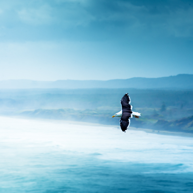 Морские фотографии Andrew Smith