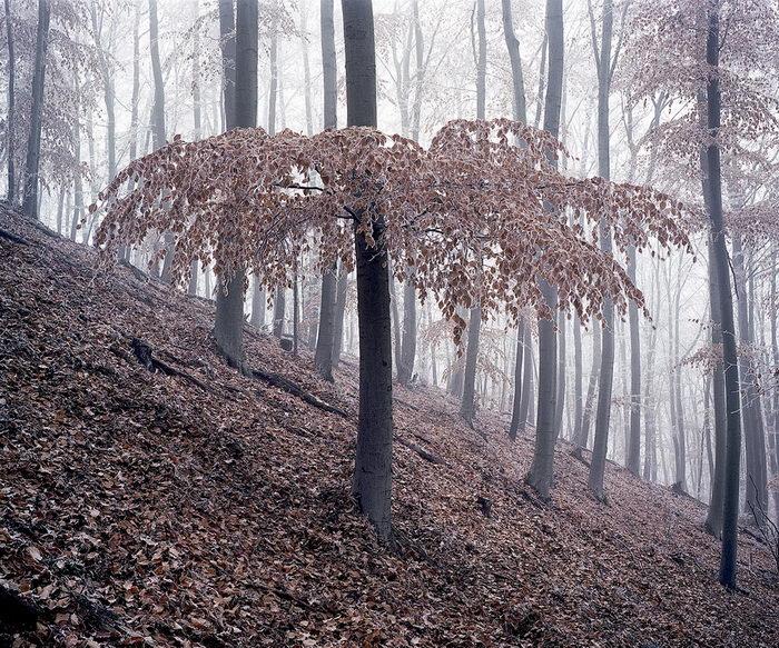 Волшебный лес в снимках Daniel Kovalovszky