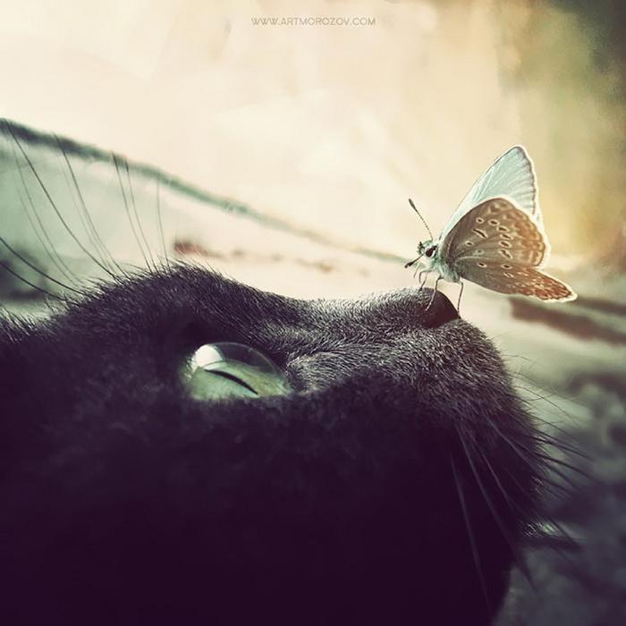 10 животных, на которых сели бабочки