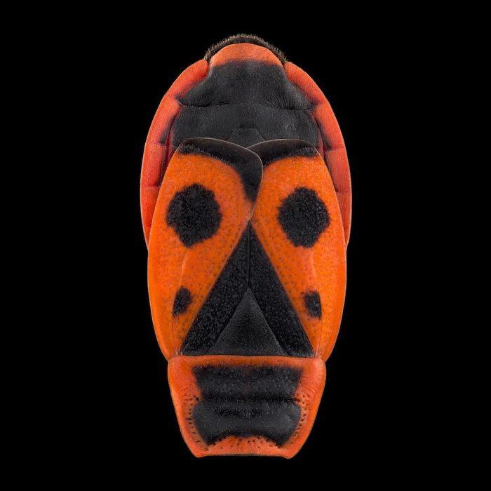 Спины насекомых как маски: фотопроект Pascal Goet