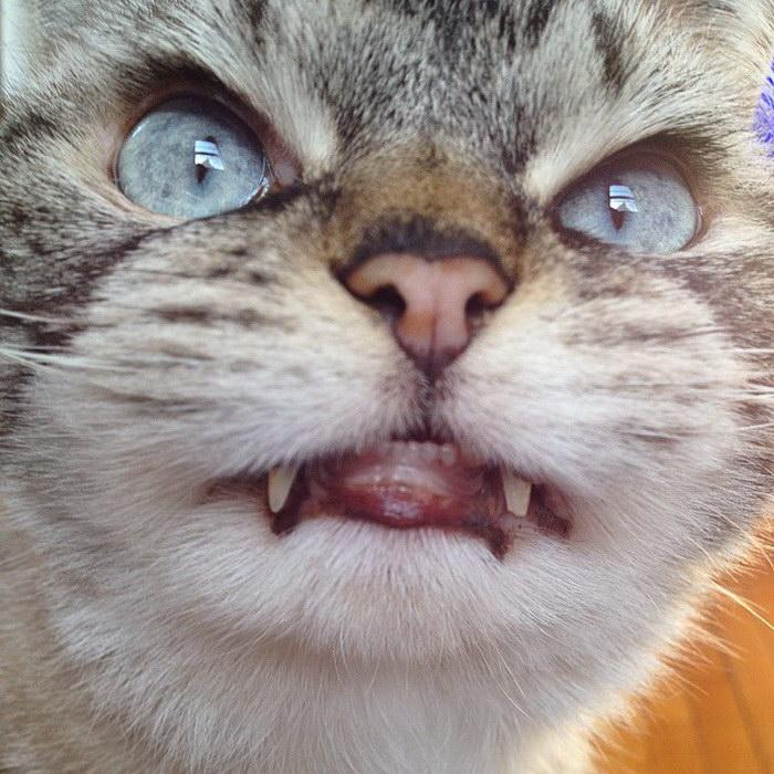 Кот-вампир Локи