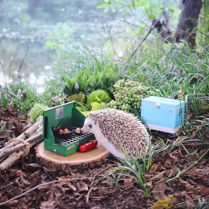 Пикник маленького ежика Azuki