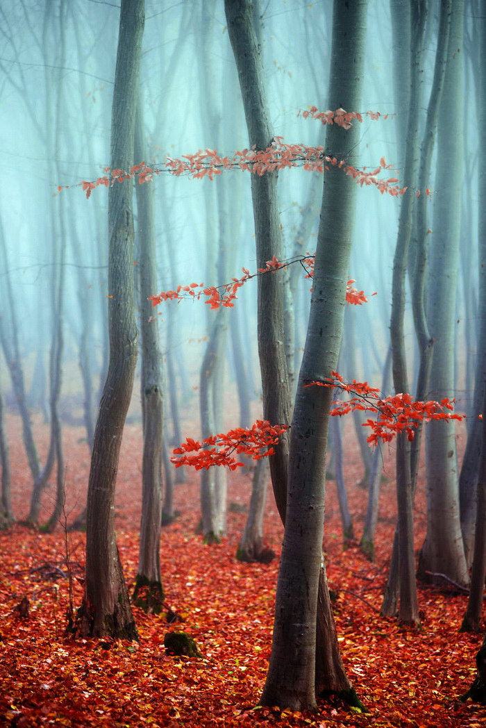 Туманное утро в Трансильвании