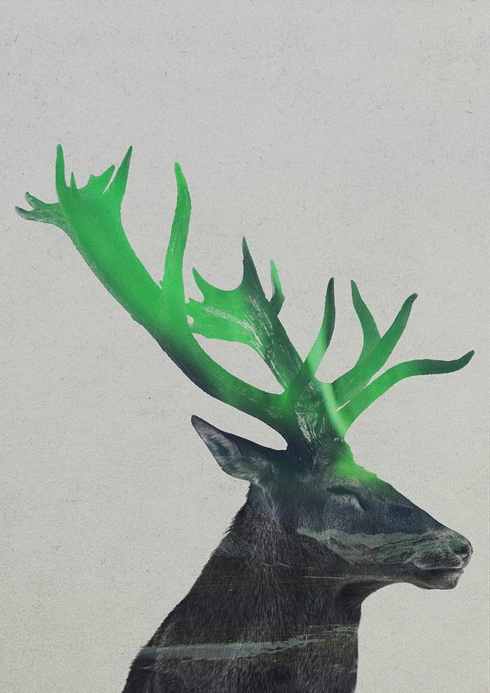 Животные в северном сиянии: работы Andreas Lie