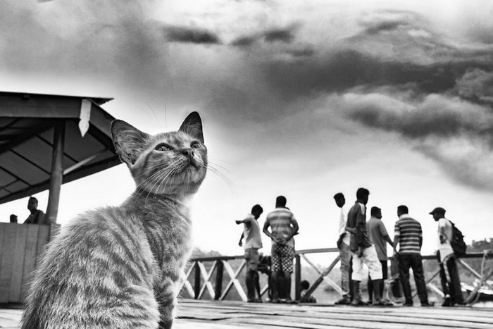 Животные на улицах Индии в снимках Raj Sarkar