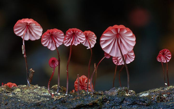 Необычные грибы в фотографиях Steve Axford